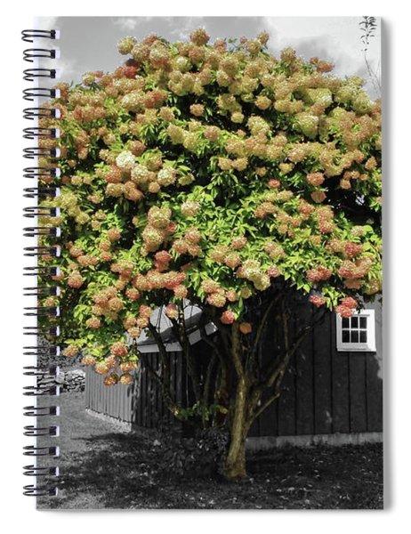 The Big Hydrangea Tree Spiral Notebook