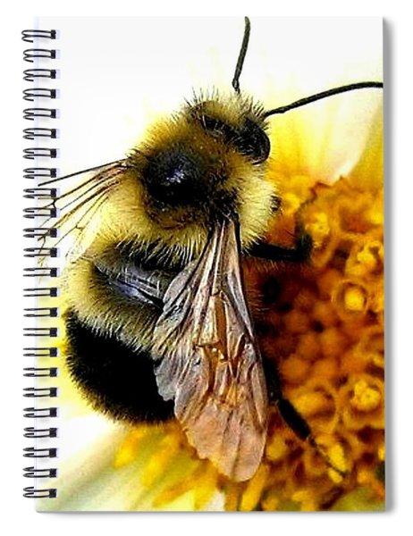 The Buzz Spiral Notebook