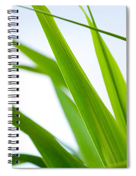 The Cane Spiral Notebook