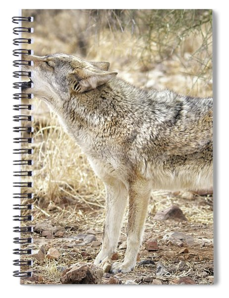 The Coyote Howl Spiral Notebook