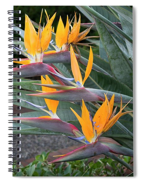 The Crane Flower - Bird Of Paradise  Spiral Notebook