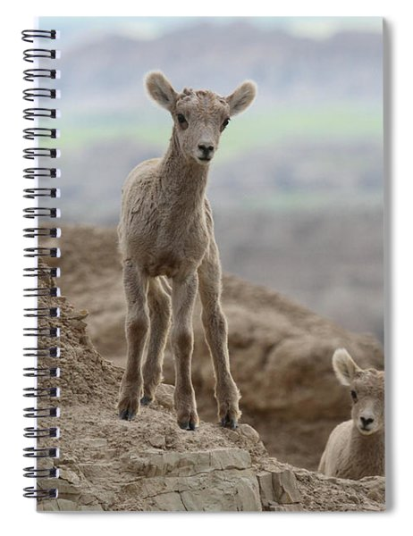 The Curious Due Spiral Notebook
