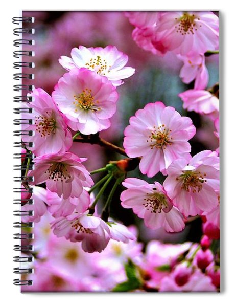 Spiral Notebook featuring the photograph The Delicate Cherry Blossoms by Patti Whitten