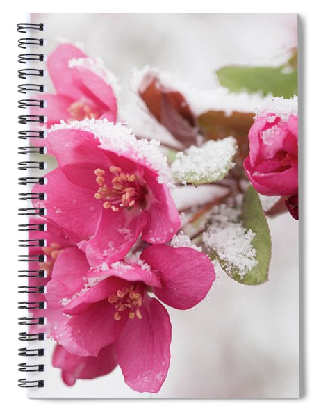 The End Of Winter Spiral Notebook