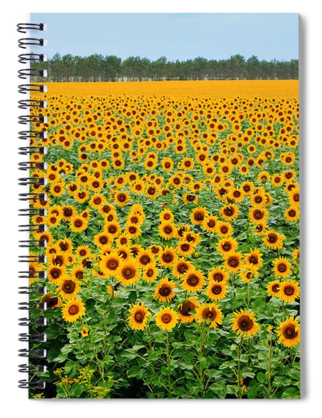 The Field Of Suns Spiral Notebook