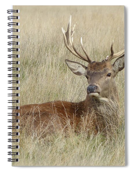 The Gentle Stag Spiral Notebook