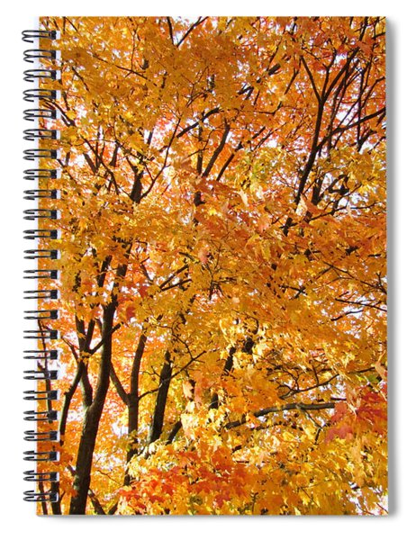 The Golden Takeover Spiral Notebook