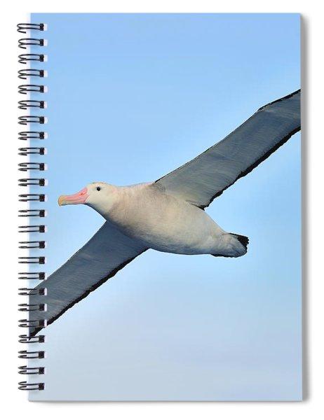 The Greatest Seabird Spiral Notebook