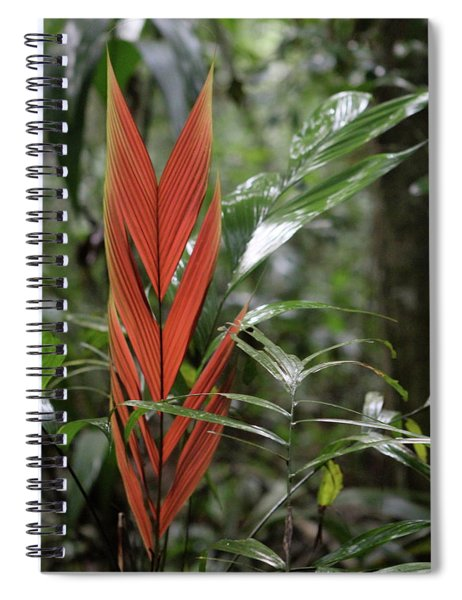 The Heart Of The Amazon Spiral Notebook
