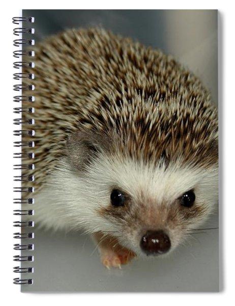 The Hedgehog Spiral Notebook