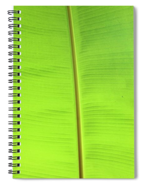 The Jungle Illuminated Spiral Notebook