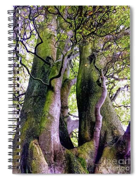 The Kings Tree Spiral Notebook