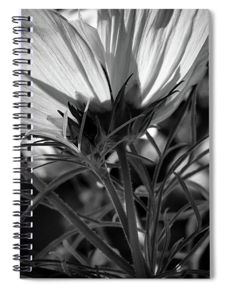 The Last Cosmos Spiral Notebook