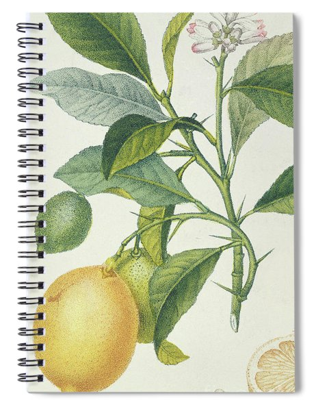 The Lemon Tree Spiral Notebook