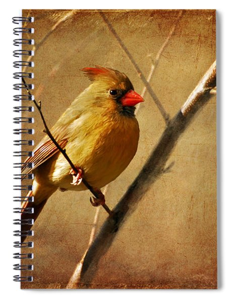 The Little Mrs. Spiral Notebook