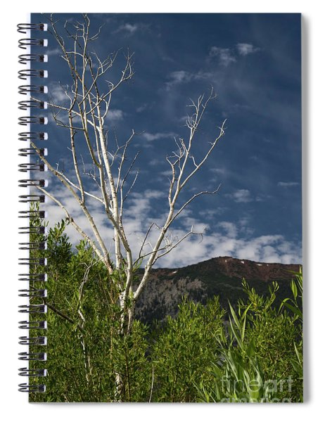 The Lonely Aspen  Spiral Notebook