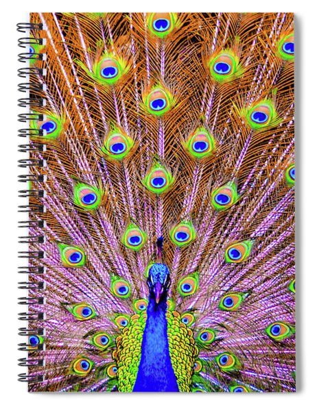 The Majestic Peacock Spiral Notebook