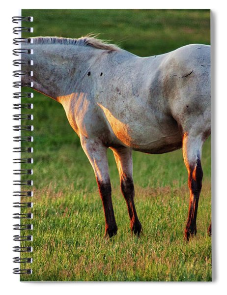 The Mare Spiral Notebook