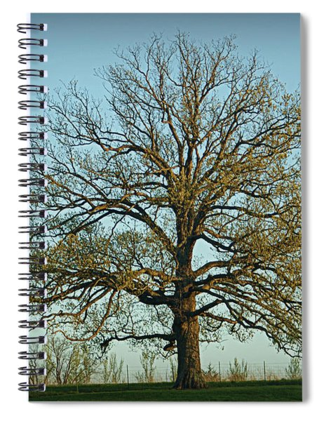 The Mighty Oak In Spring Spiral Notebook