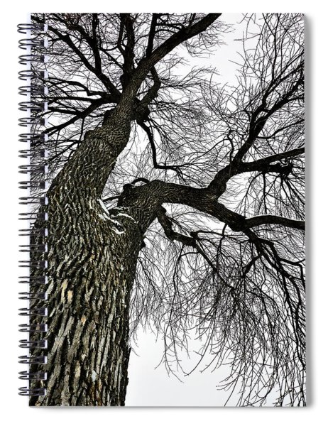 The Old Tree Spiral Notebook