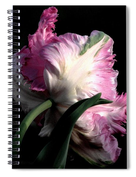 The Parrot Tulip Queen Of Spring Spiral Notebook
