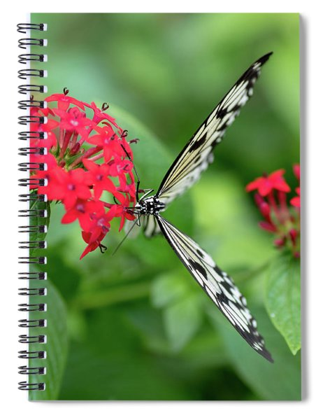 The Perfect Butterfly Land Spiral Notebook