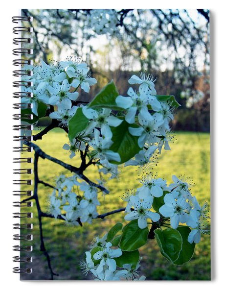 The Promise Of Spring 1c Spiral Notebook