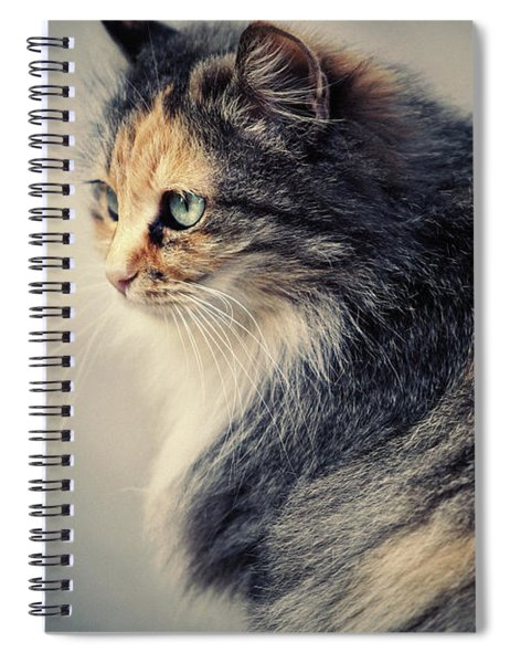 The Sad Street Cat Spiral Notebook