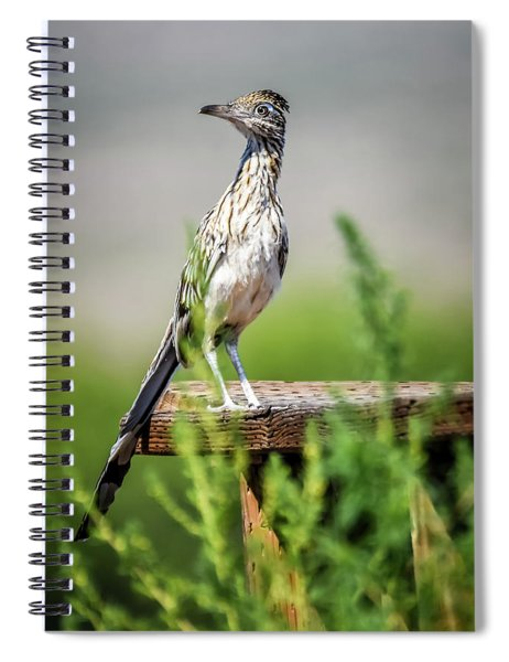The Smug Roadrunner Spiral Notebook