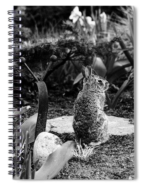 The Snail And The Bunny Spiral Notebook