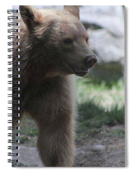 The Spirit Bear Spiral Notebook