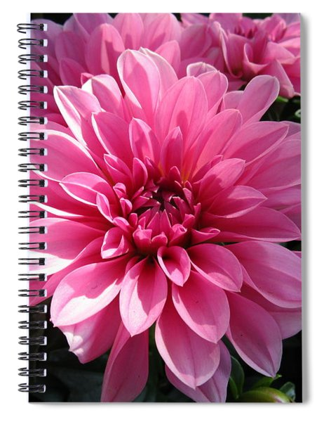 The Sweetest Spiral Notebook