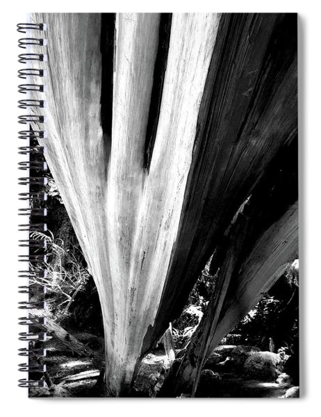 The Swoop Of Fallen Wood Spiral Notebook by Lorraine Devon Wilke