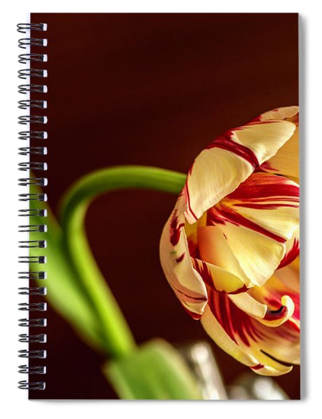 The Tulip's Bow Spiral Notebook