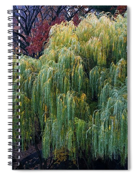 Spiral Notebook featuring the photograph The Willows Of Central Park by Lorraine Devon Wilke