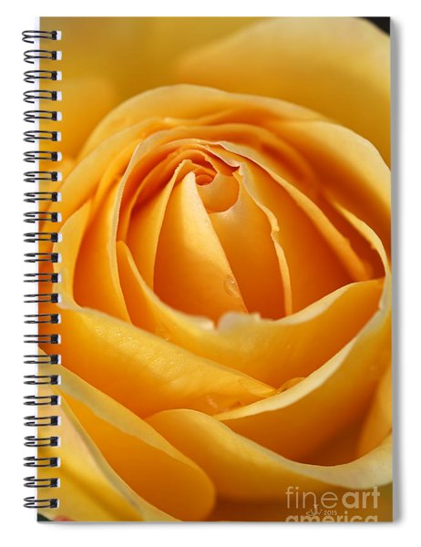 The Yellow Rose Spiral Notebook