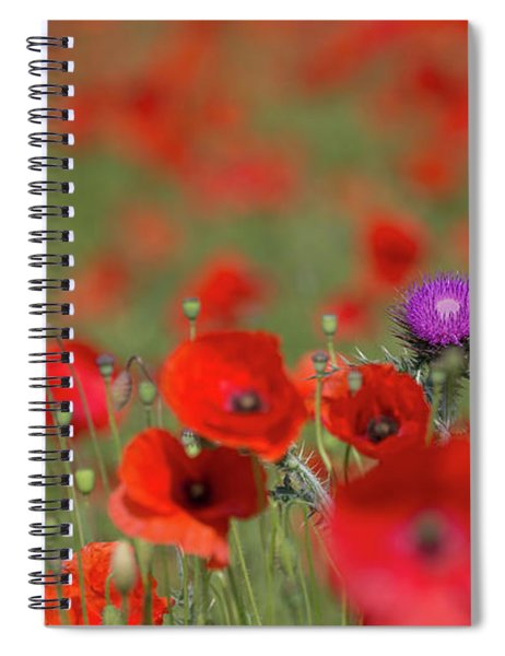 Thistle In A Sea Of Red Spiral Notebook