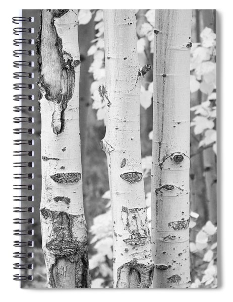 Three Aspens In Black And White  Spiral Notebook