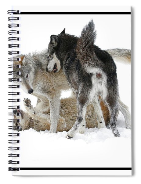 Three Bad Wolves 2 Spiral Notebook