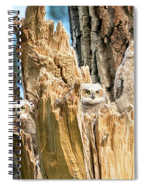 Three Great Horned Owl Babies Spiral Notebook