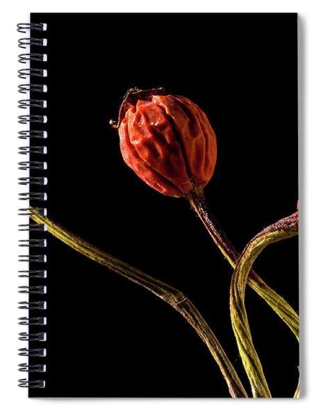 Three Rose Hips Spiral Notebook