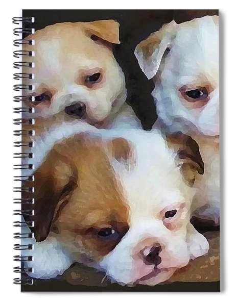 Three Sweeties Spiral Notebook