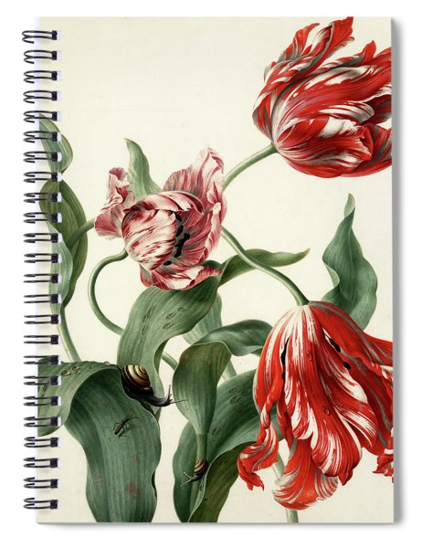 Three Tulips Spiral Notebook