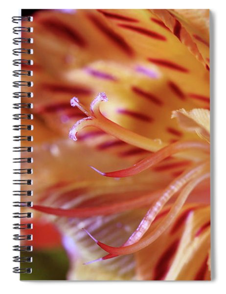 Tiger Lily Abstract Spiral Notebook