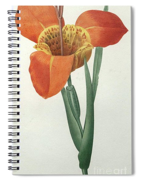 Tiger Or Shell Flower Spiral Notebook