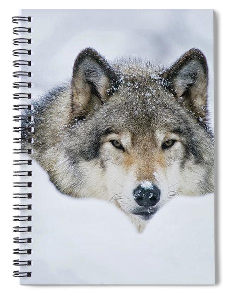 Timber Wolf Picture - Tw281 Spiral Notebook