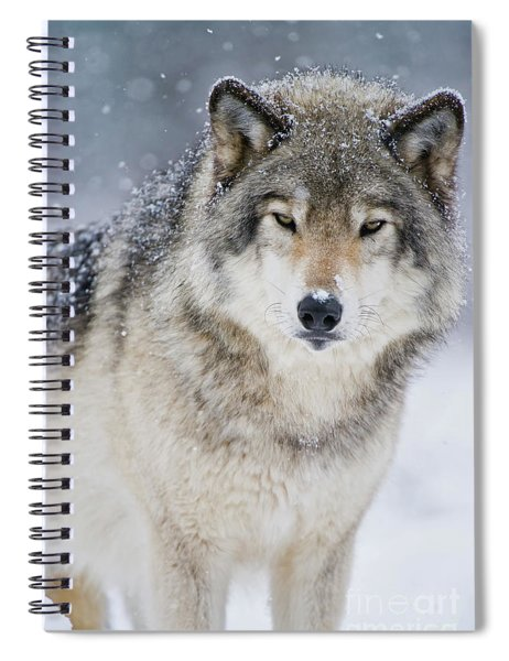 Timber Wolf Picture - Tw282 Spiral Notebook