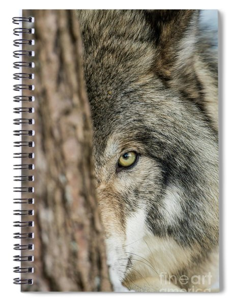 Timber Wolf Picture - Tw285 Spiral Notebook