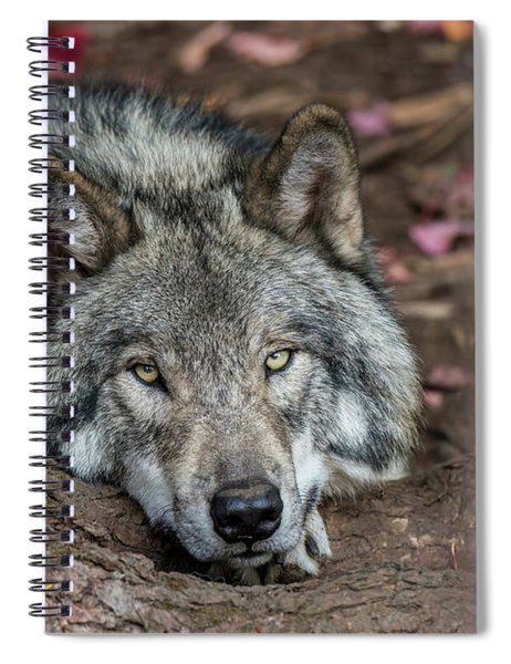 Timber Wolf Picture - Tw286 Spiral Notebook