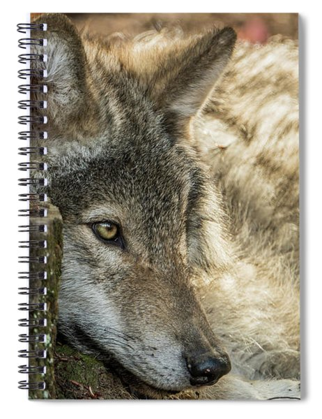 Timber Wolf Picture - Tw287 Spiral Notebook